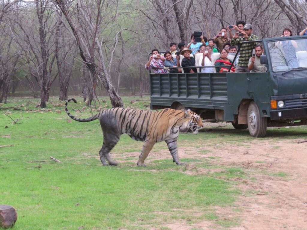 ranthambore-online-safari-by-canter